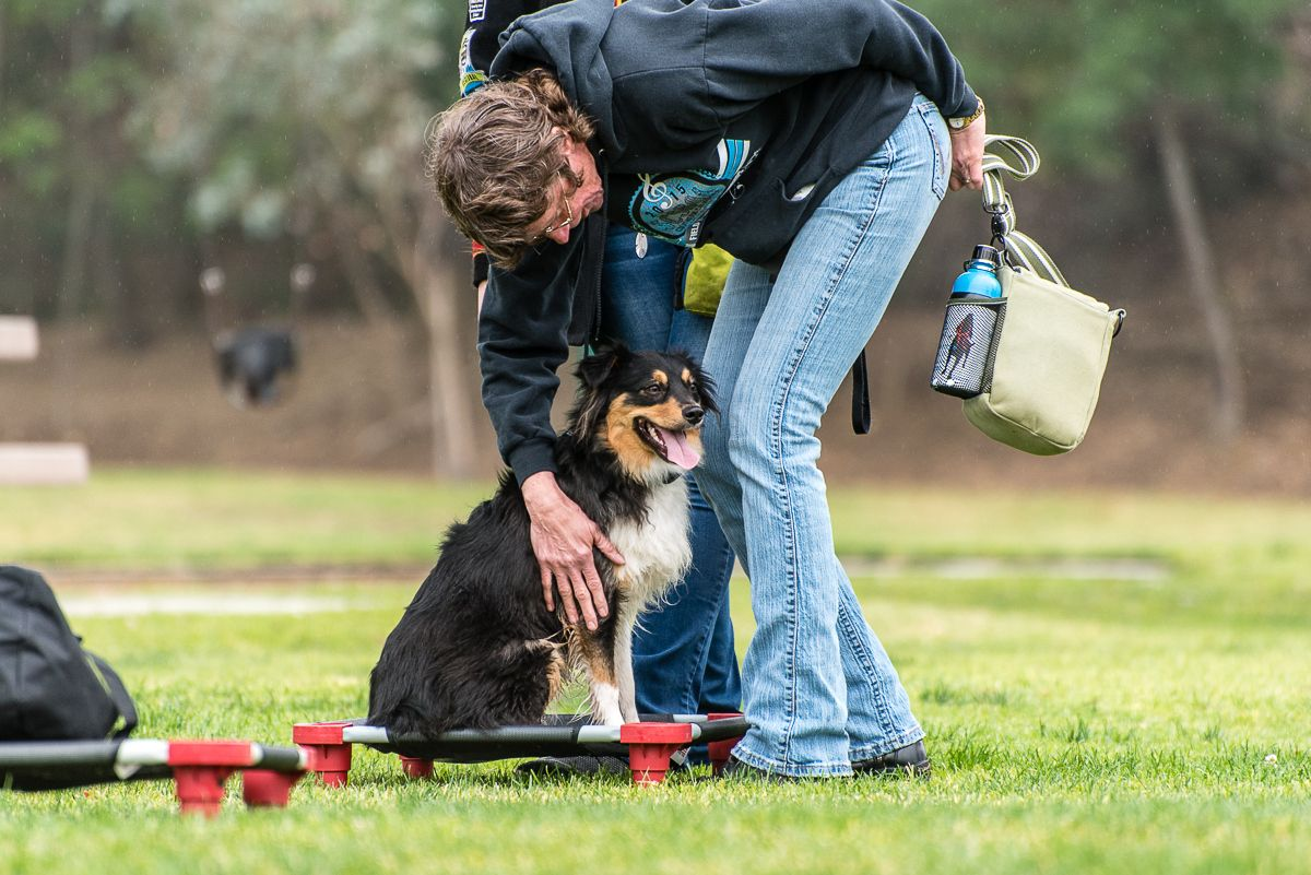 Cgc Certification Is The First Step To Therapy Dog Training But