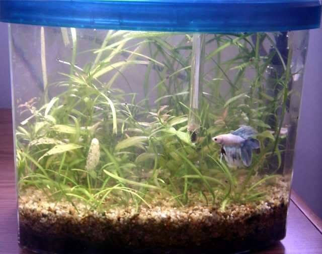 2 5 gallon natural planted betta tank aquariums for Natural fish tank