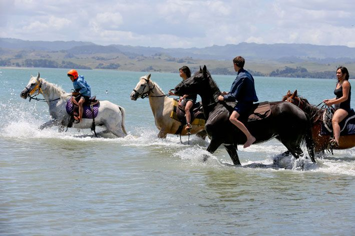 You're invited to horse ride the eco wonderland of Kawhia... www.horse.co.nz