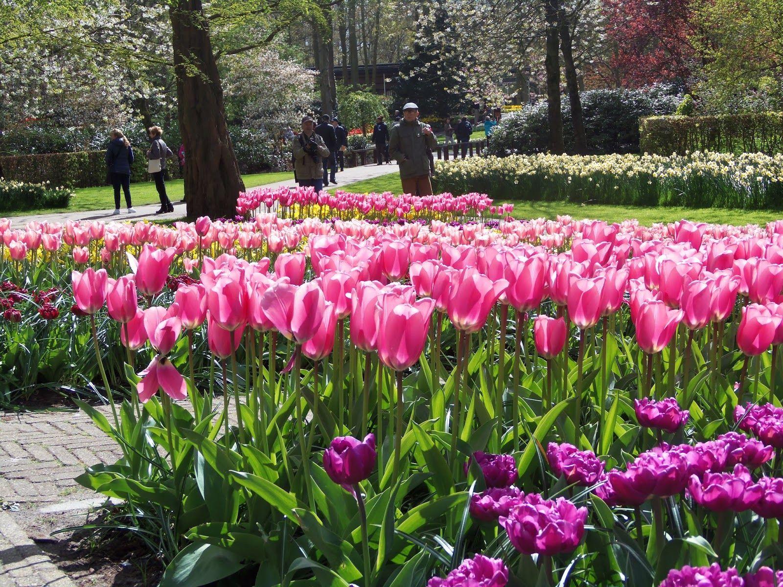 As flores holandesas
