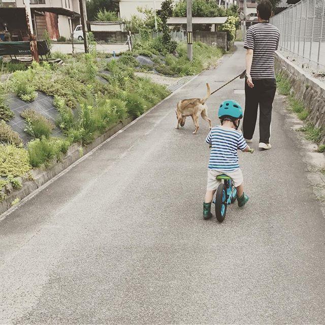 ✨じいちゃんときんた、そして僕✨〜とあ  3歳7ヶ月〜 * じいちゃんと一緒に、愛犬🐕のきんたの散歩をしました🚶 * じいちゃんとまさかのリンクコーデ(笑)🌻😆 * * #親バカ #親バカ部 #キズナ #キッセレ #コノビー #3歳 #3歳7ヶ月 #コドモノ #コドモダカラ #ママリ #キッズ #キッズコミュ #子育て #子育て日記 #子育て記録 #リンクコーデ #mamanoko #kids #kids_japan #ig_kids #ig_japan #ig_kidsphoto #男の子 #じいちゃん #犬 #愛犬 #田舎暮らし #ママchan #ママカメラ #子供