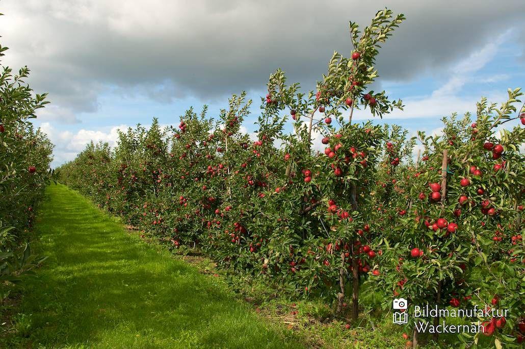 cool Apfelplantage Königreich Numero 2,  #Landleben