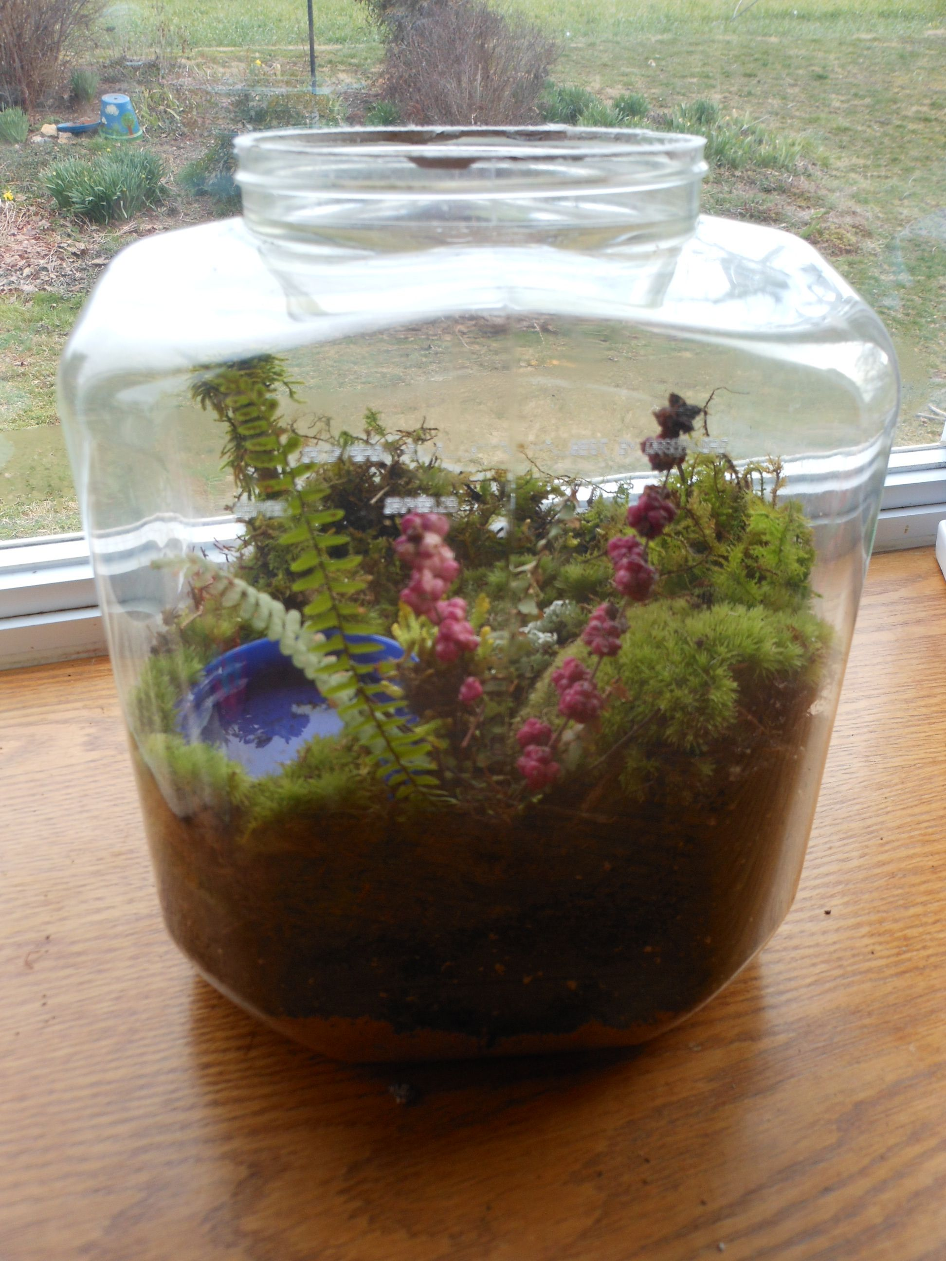 terrarium containers cheap with nice terrarium containers