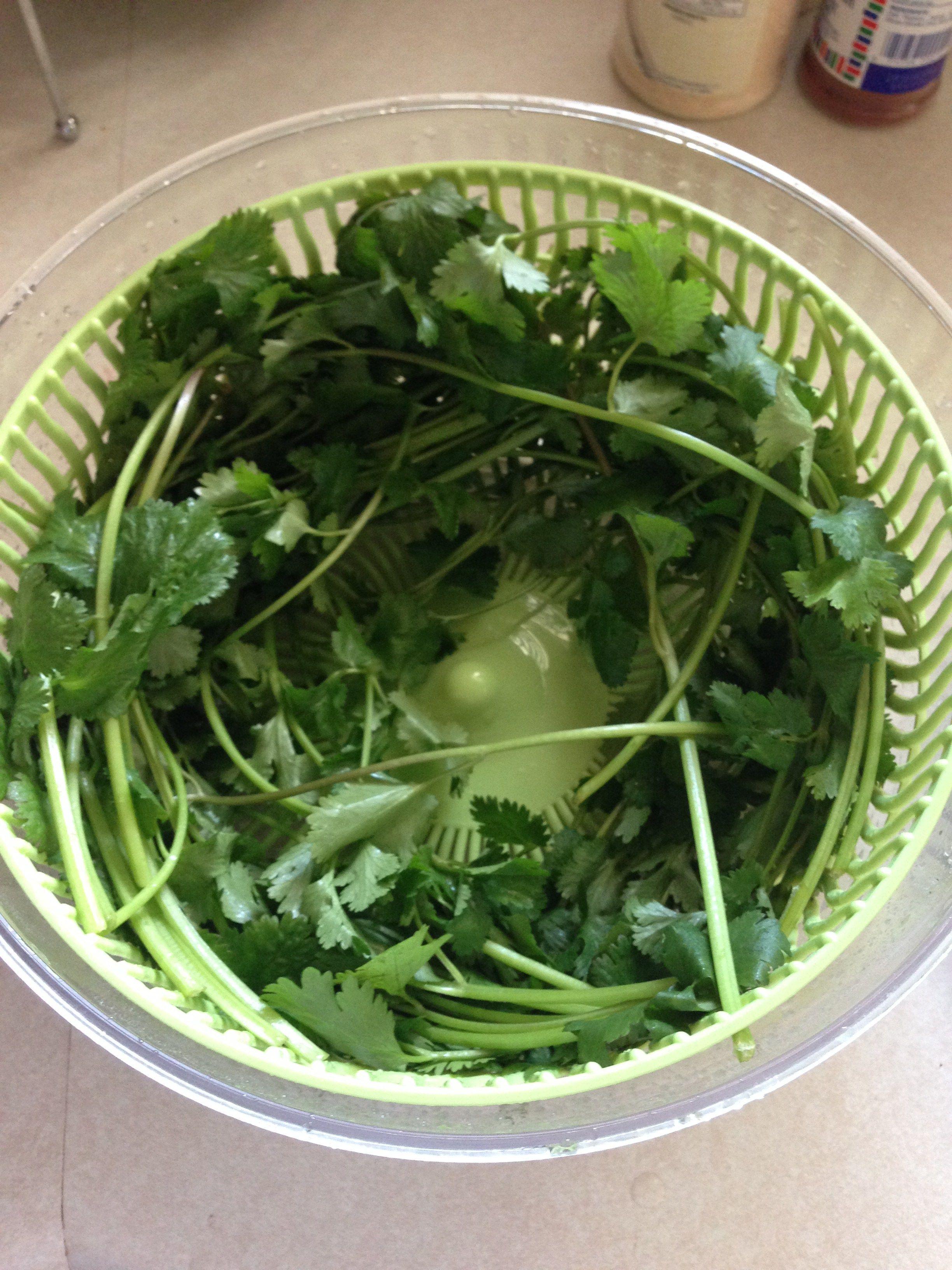 How to keep cilantro fresh in the fridge cilantro how to