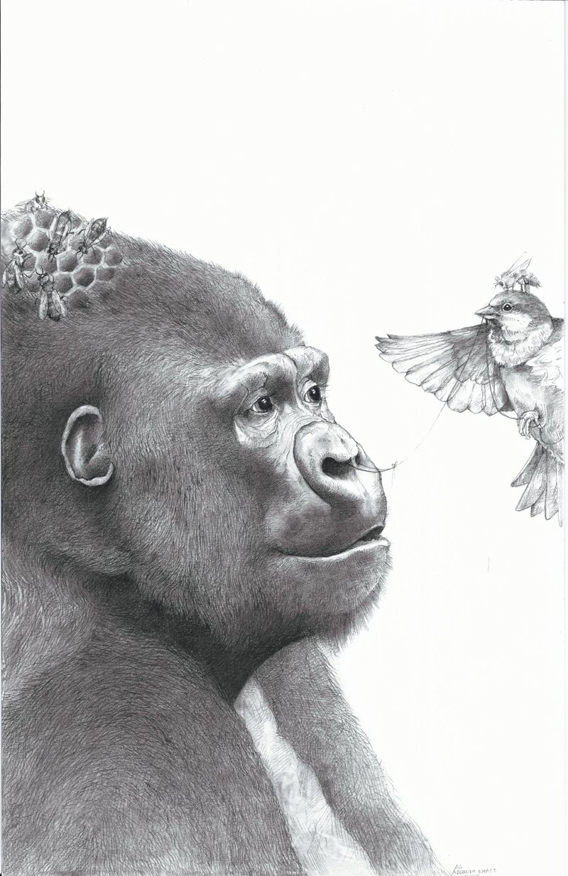 Gorilla with bird by adonna khare 1 the magical realists in