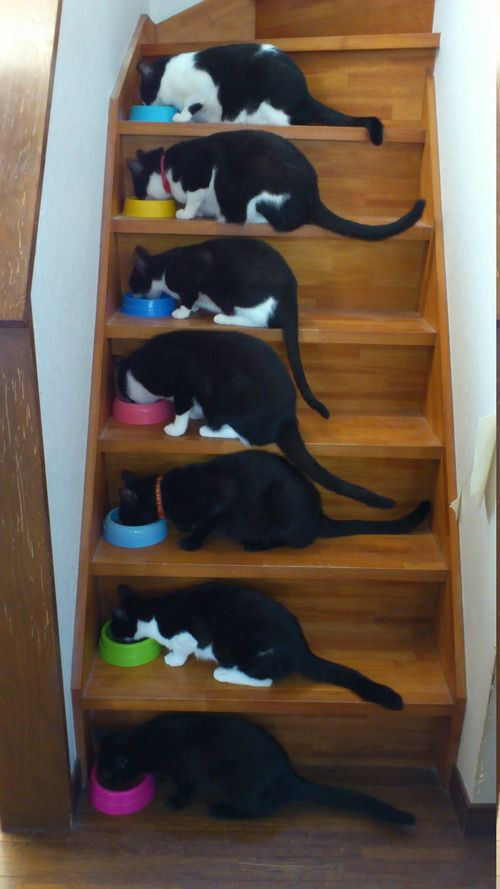 Stairway to heaven....cats