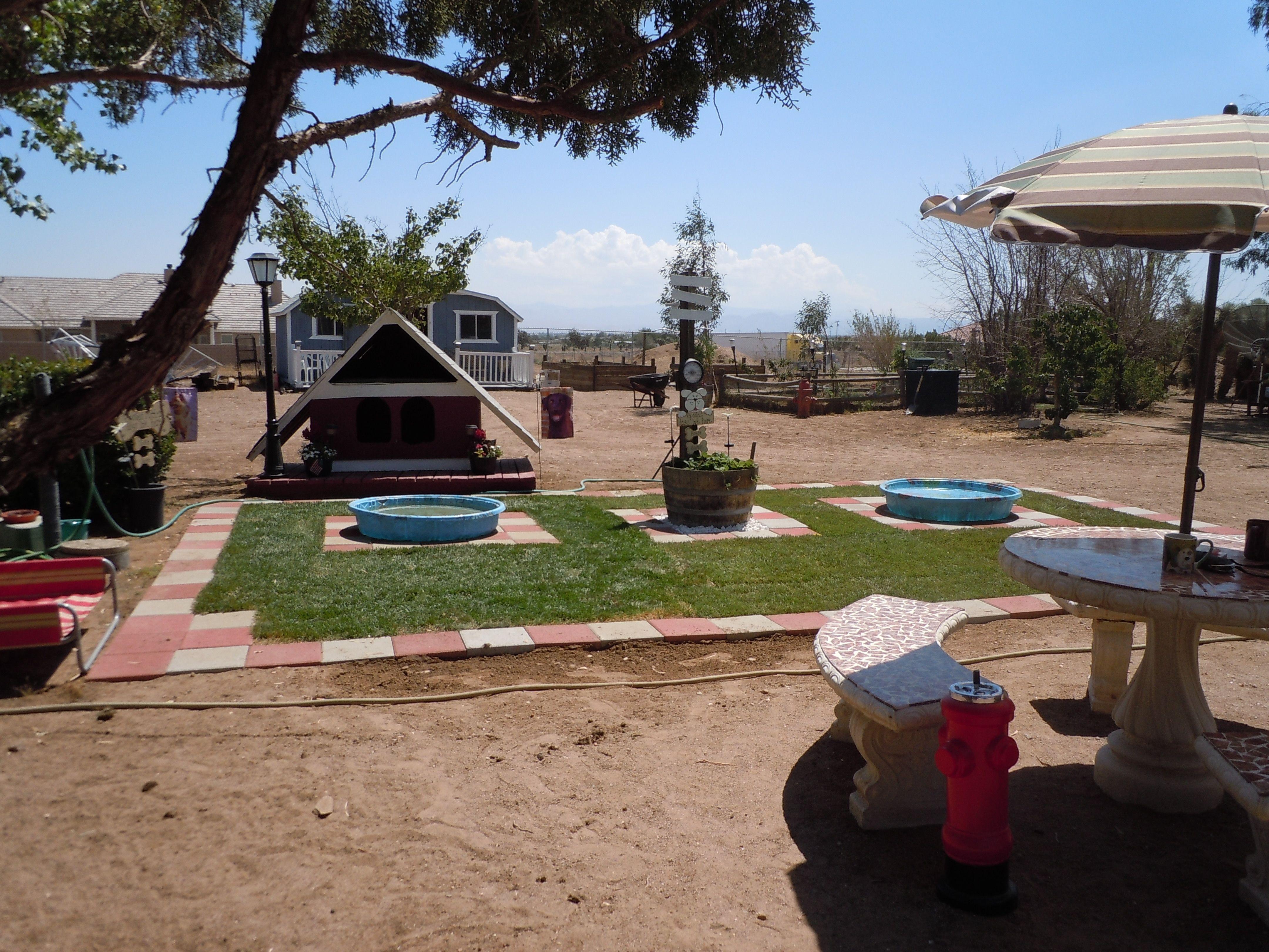 New Doggie Summer Play Area Dog Backyard Dog Psychology Dog Rooms