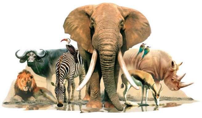 Safari wandsticker 60hx90b
