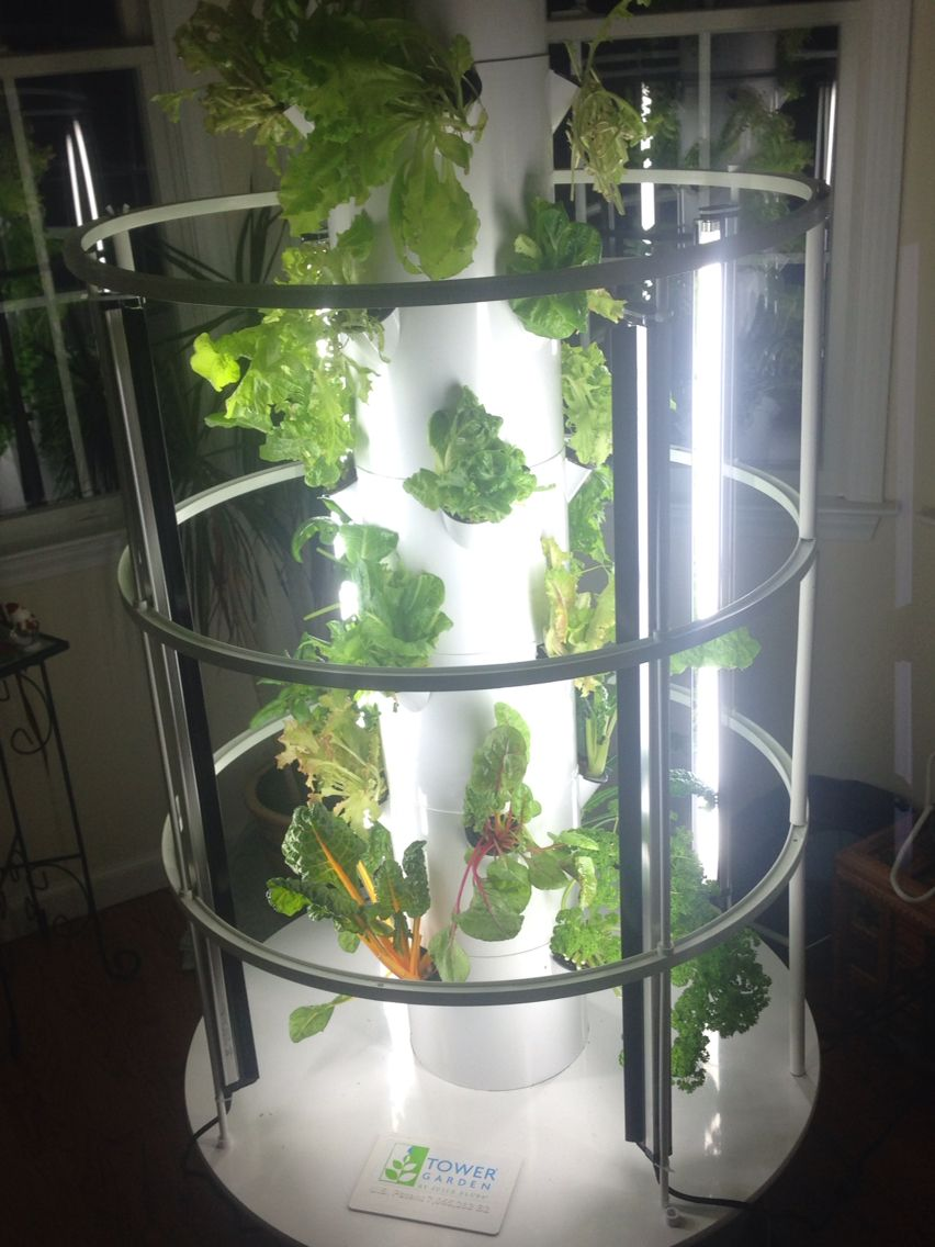 Indoor year round growing herbs, lettuces, kale, spinach