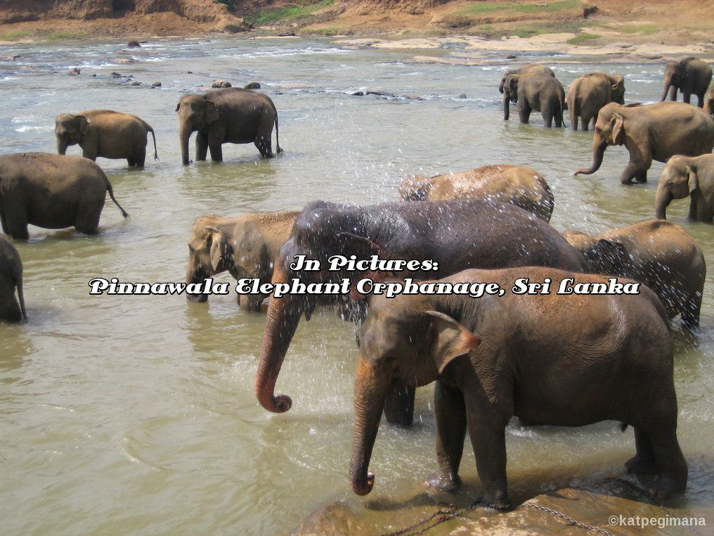 a photo essay of the pinnawala elephant orphanage in sri lanka  elephant essay a photo essay of the pinnawala elephant orphanage in sri lanka