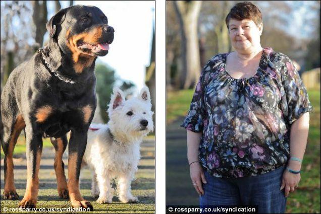 Rottweiler Pregnant By Terrrier Rottweiler Rottweiler Puppies