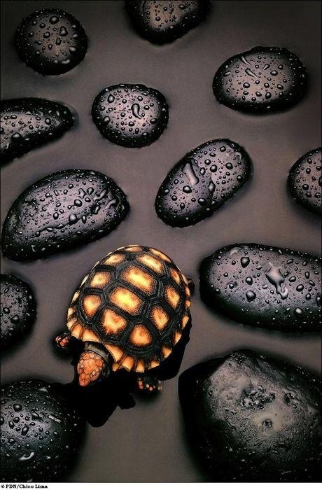 Turtle amidst the stones
