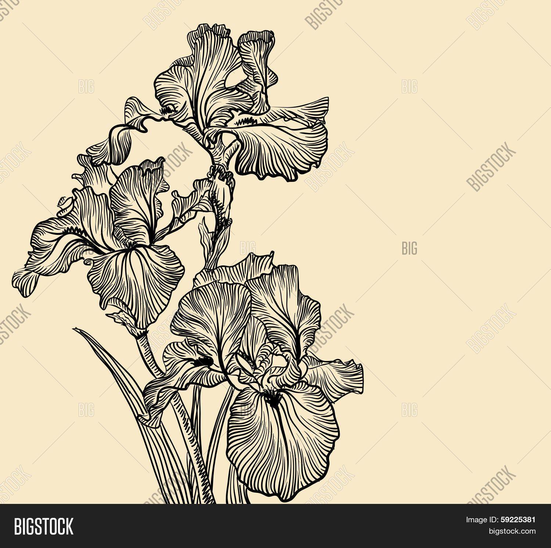 Stock Vector By Olgaberlet Iris Flowers Iris Flower Tattoo Flower Drawing