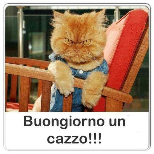 Buongiorno quotes pinterest vignettes humor and for Buongiorno con gattini