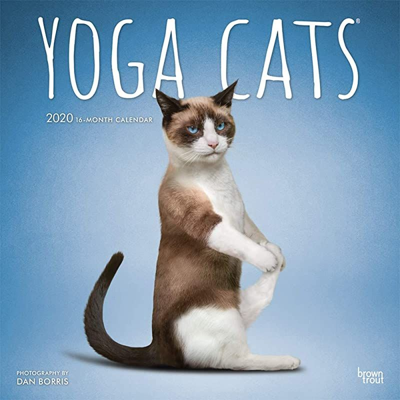 Pdf Yoga Cats 2020 12 X 12 Inch Monthly Square Wall Calendar Animals Humor Cat By Yoga Cats 202
