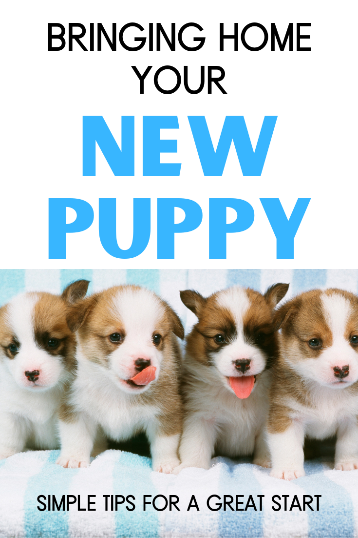 How To Introduce A New Dog Or Cat To Your Family With Kids Introducing A New Dog New Puppy Best Dogs For Families