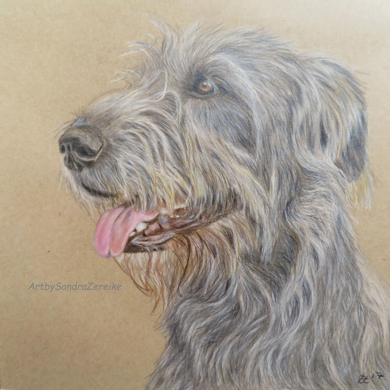 Zeichnung Irischer Wolfshund Original Buntstiftzeichnung Hunde 20