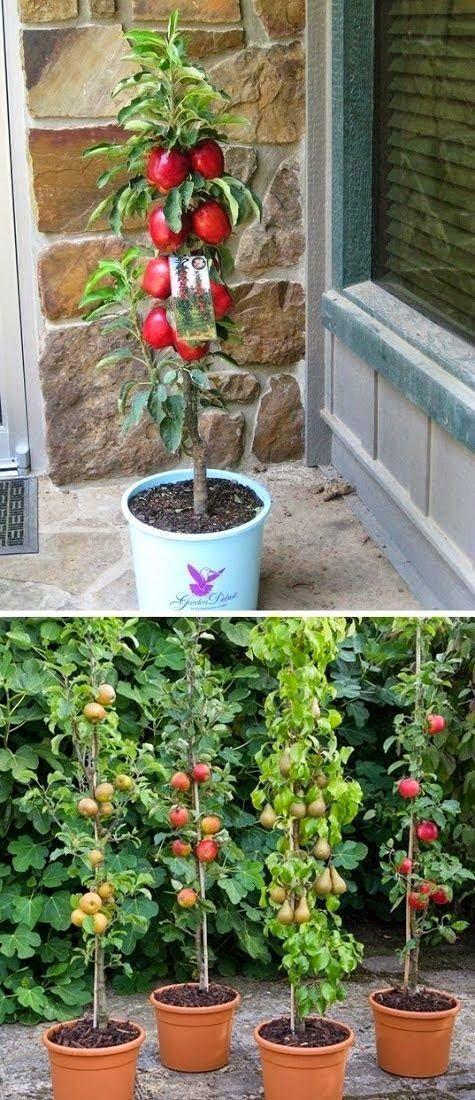 Grow Columnar Apple Trees Vertically | Plants, Fruit ...