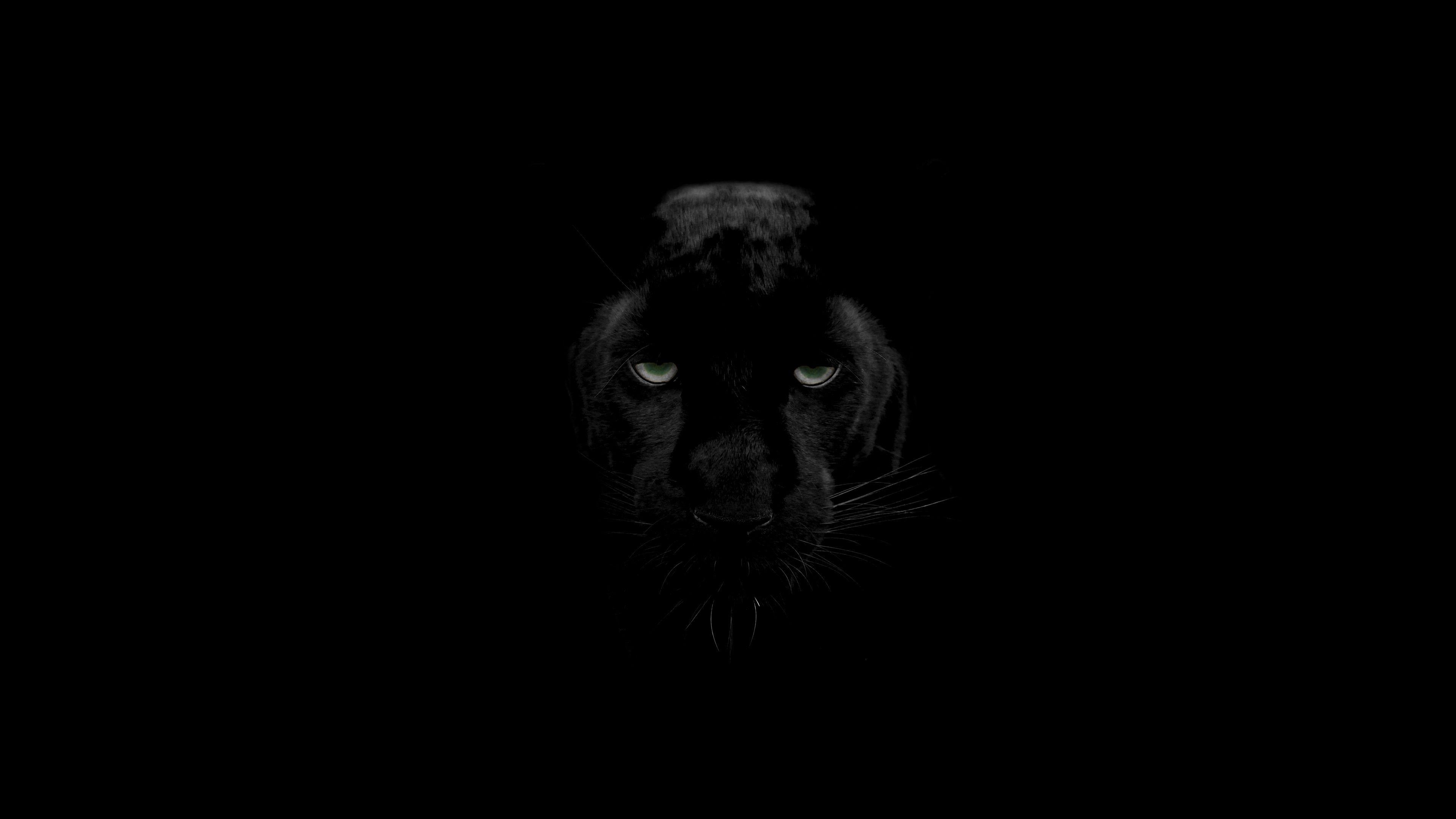 Black Panther 4K Panther, Black panther, Black desktop