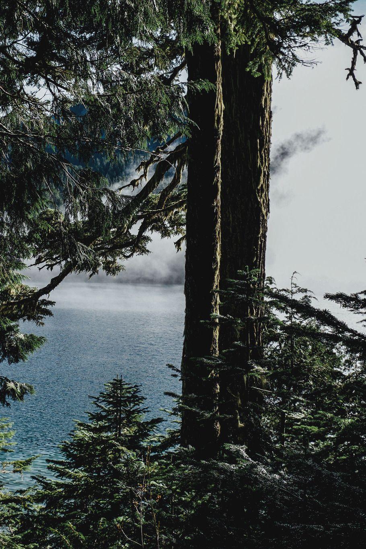 #magic #forest #lake