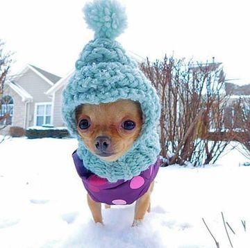 Disenos Curiosos De Gorros Tejidos Para Perros A Crochet Imagenes De Perros Graciosos Abrigos Para Perros Perros