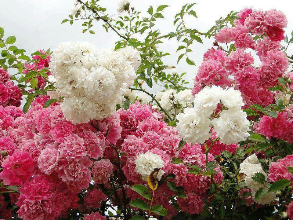 Flores coloridas no ar