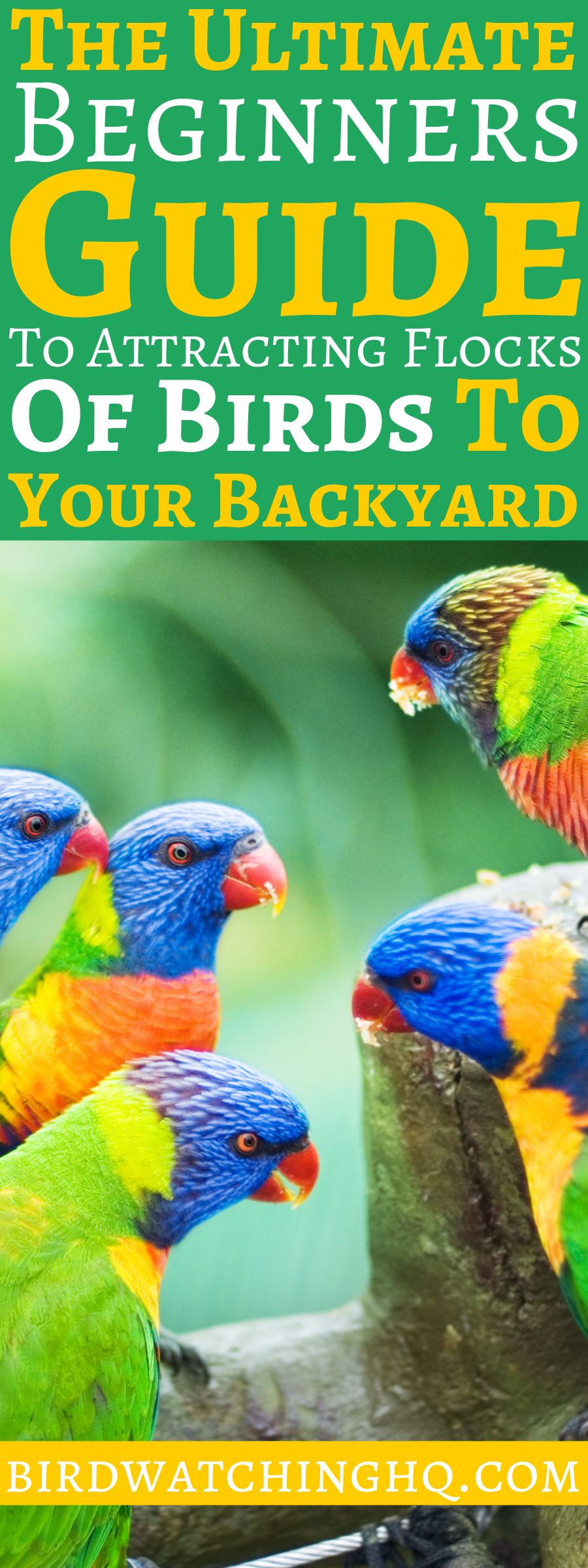 Attract Birds With These SIMPLE Strategies 2020 | How to ...