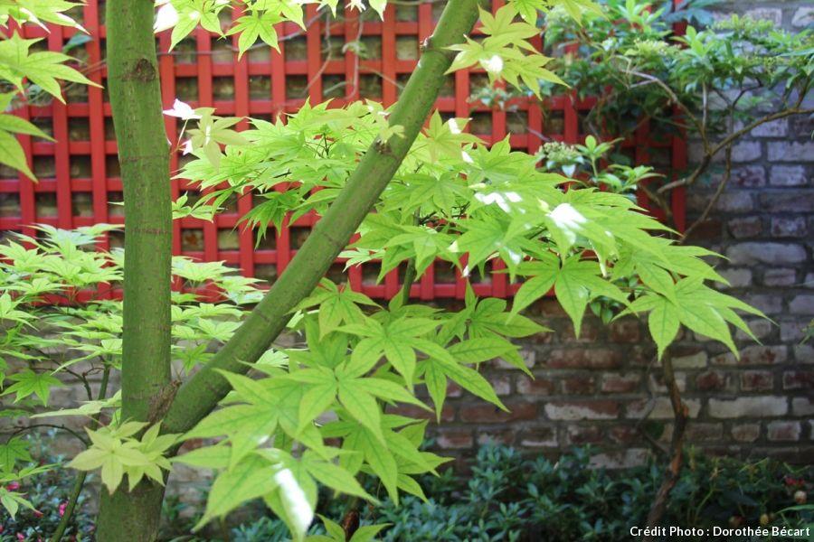 Un Jardin Japonais Aux Portes De Lille Jardins Japon Et Erable Du Japon