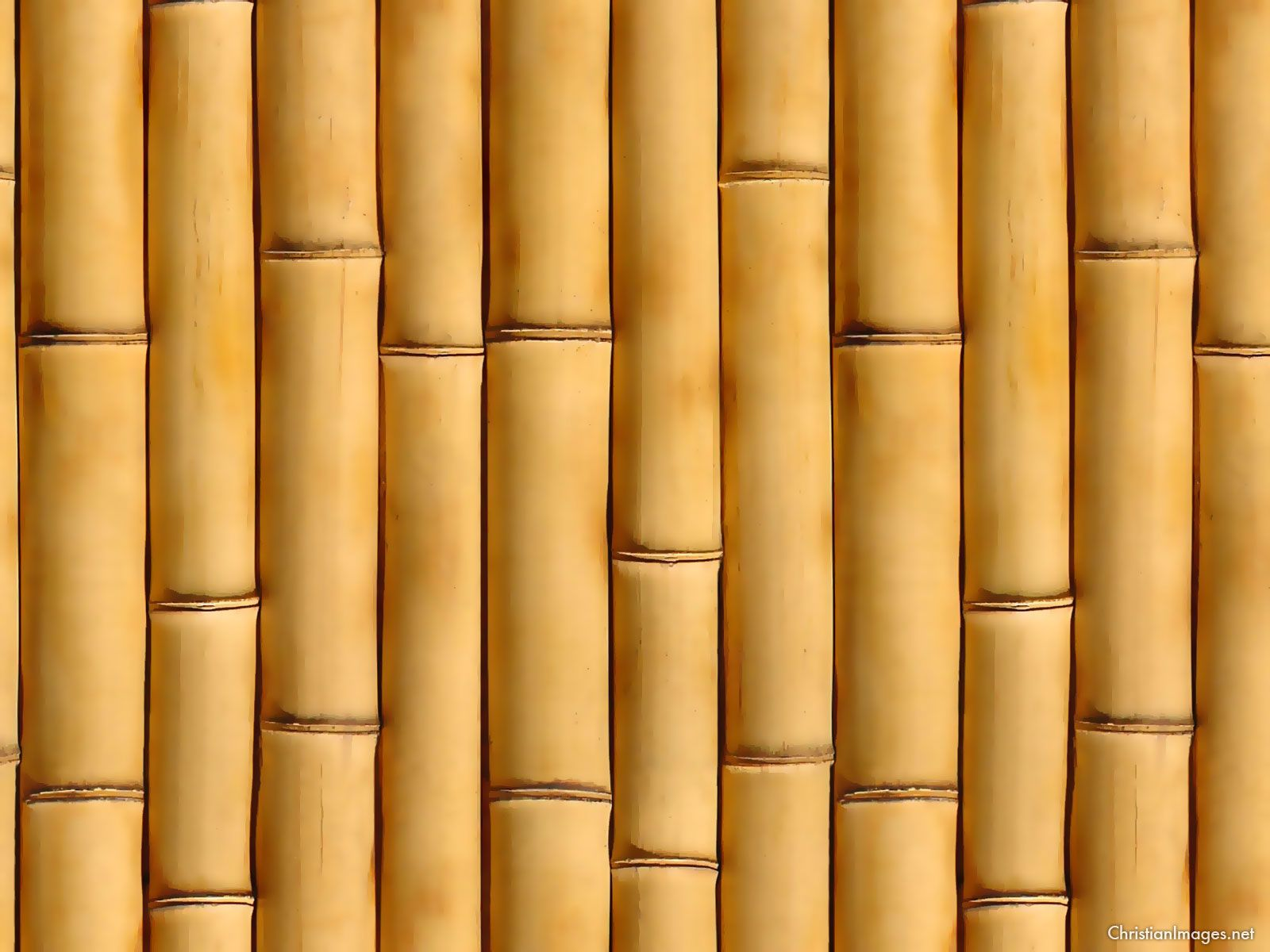 classic bamboo background