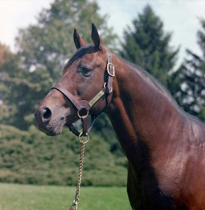 Citation At 23 In 1968 He Died 2 Years Later Triple Crown Winner 1948 Thoroughbred Horse Racehorse Beautiful Horses