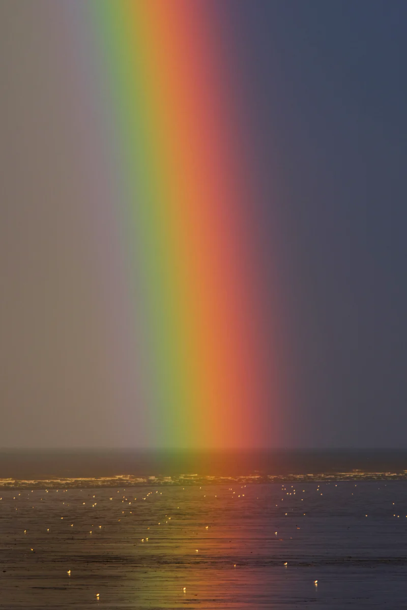 900 Rainbow Images Download Hd Pictures Photos On Unsplash In 2020 Rainbow Pictures Rainbow Images Rainbow Photo