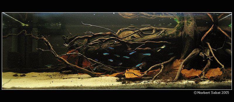 Amazon Biotope Nice Use Of Driftwood And Leaves A Very Good Aquascape Ikan Akuarium Akuarium Gajah