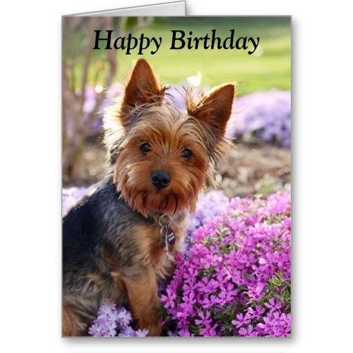 Yorkshire Terrier Dog Photo Custom Birthday Card Zazzle Com Yorkshire Terrier Dog Yorkie Dogs Yorkshire Terrier Puppies
