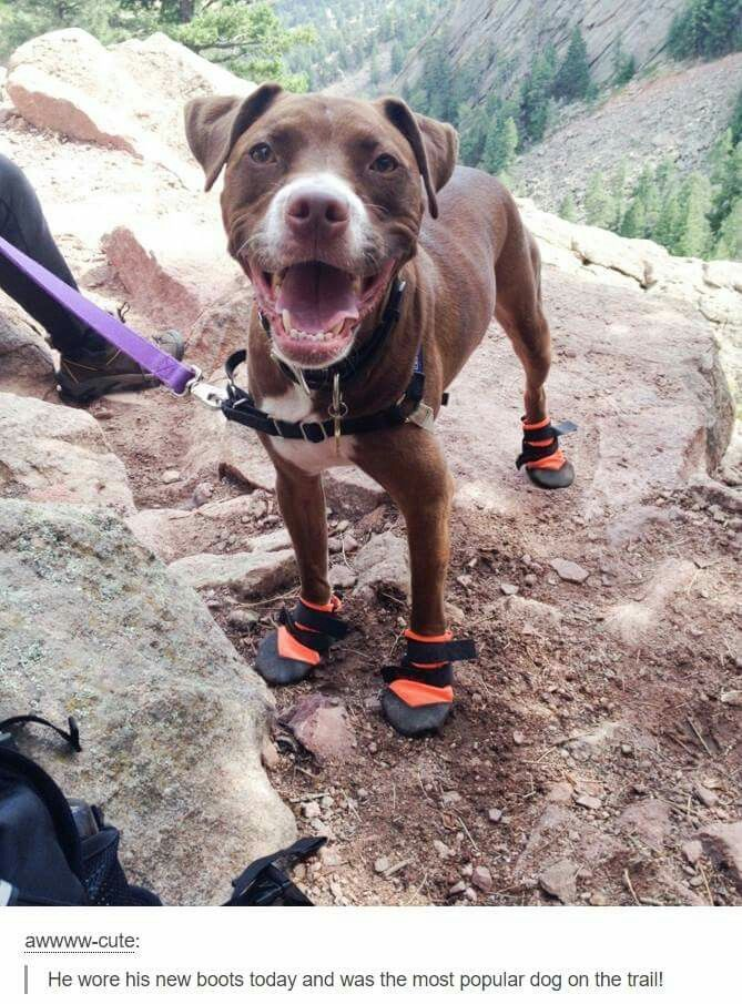 I just love how happy the dog looks wearing his little hiking  boots