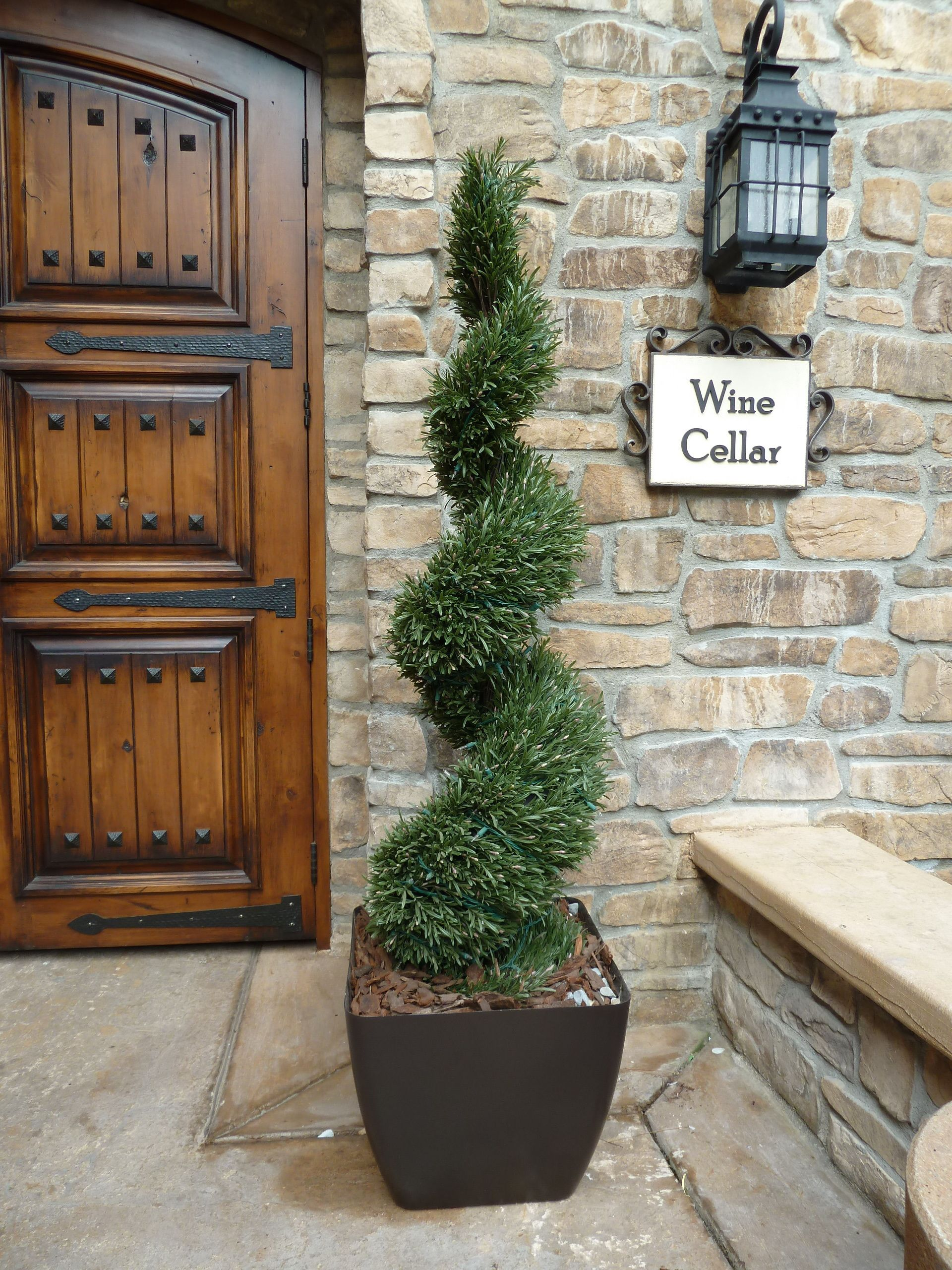 Rosemary Spiral Deluxe With Images Topiary Plants Porch
