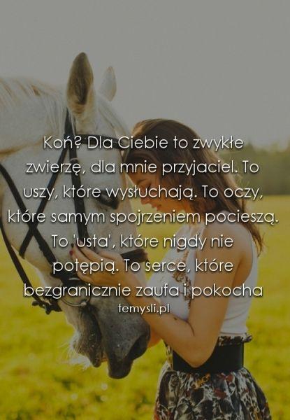 cytaty o koniach cytaty o koniach   Szukaj w Google | cytaty koniałowe | Horses  cytaty o koniach
