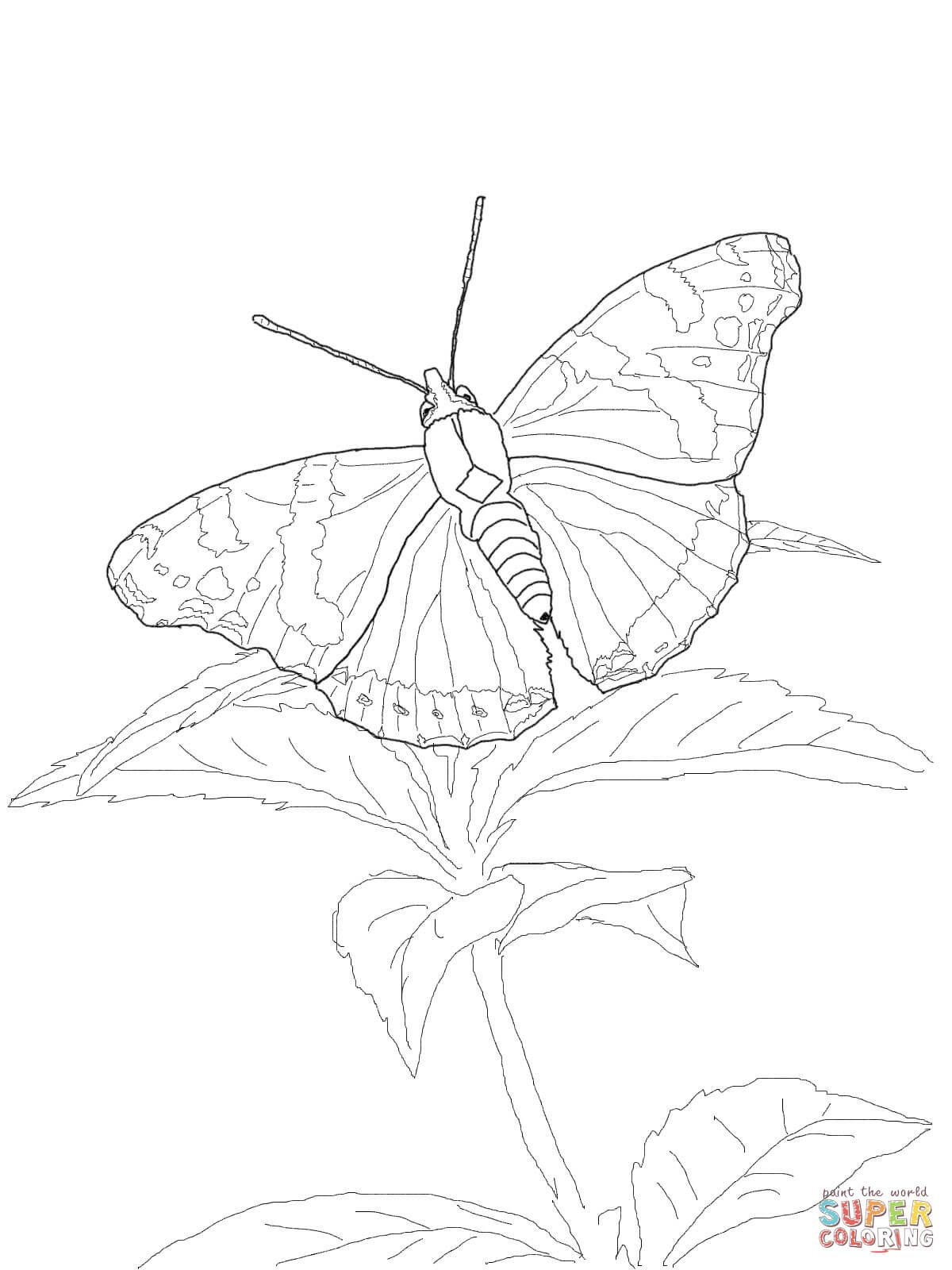 Red Admiral Butterfly Super Coloring In 2020 Butterfly Black