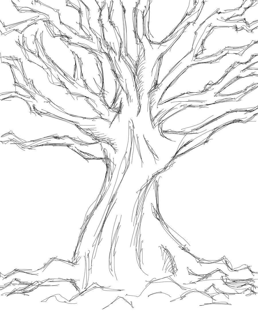 tree sketches drawing
