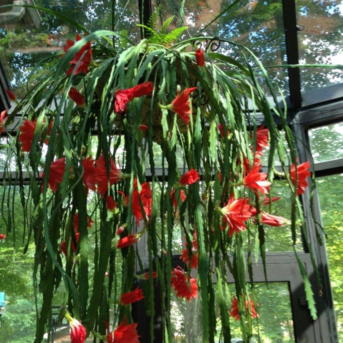 imágenes que muestran la variedad de colores del bonito cactus del