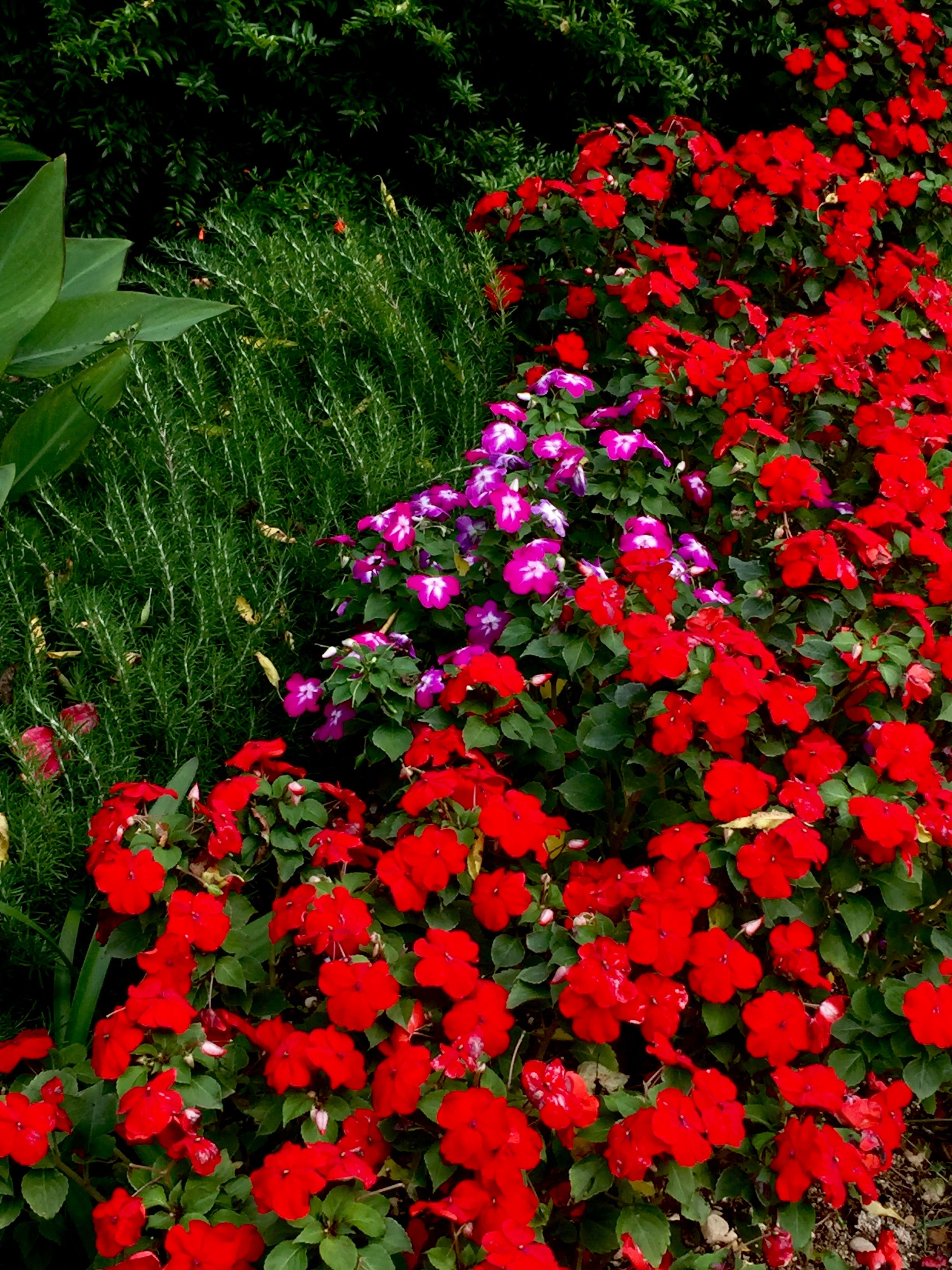 Pin by on beautiful flowers in 2018 pinterest flower beds garden beds beautiful flowers flower borders pretty flowers garden mightylinksfo