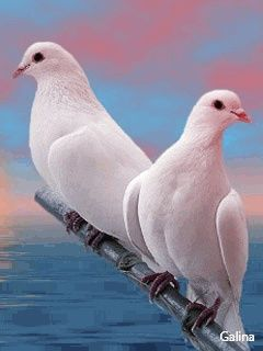 Palomas Blancas Birds Pinterest Birds Beautiful Birds And Animals