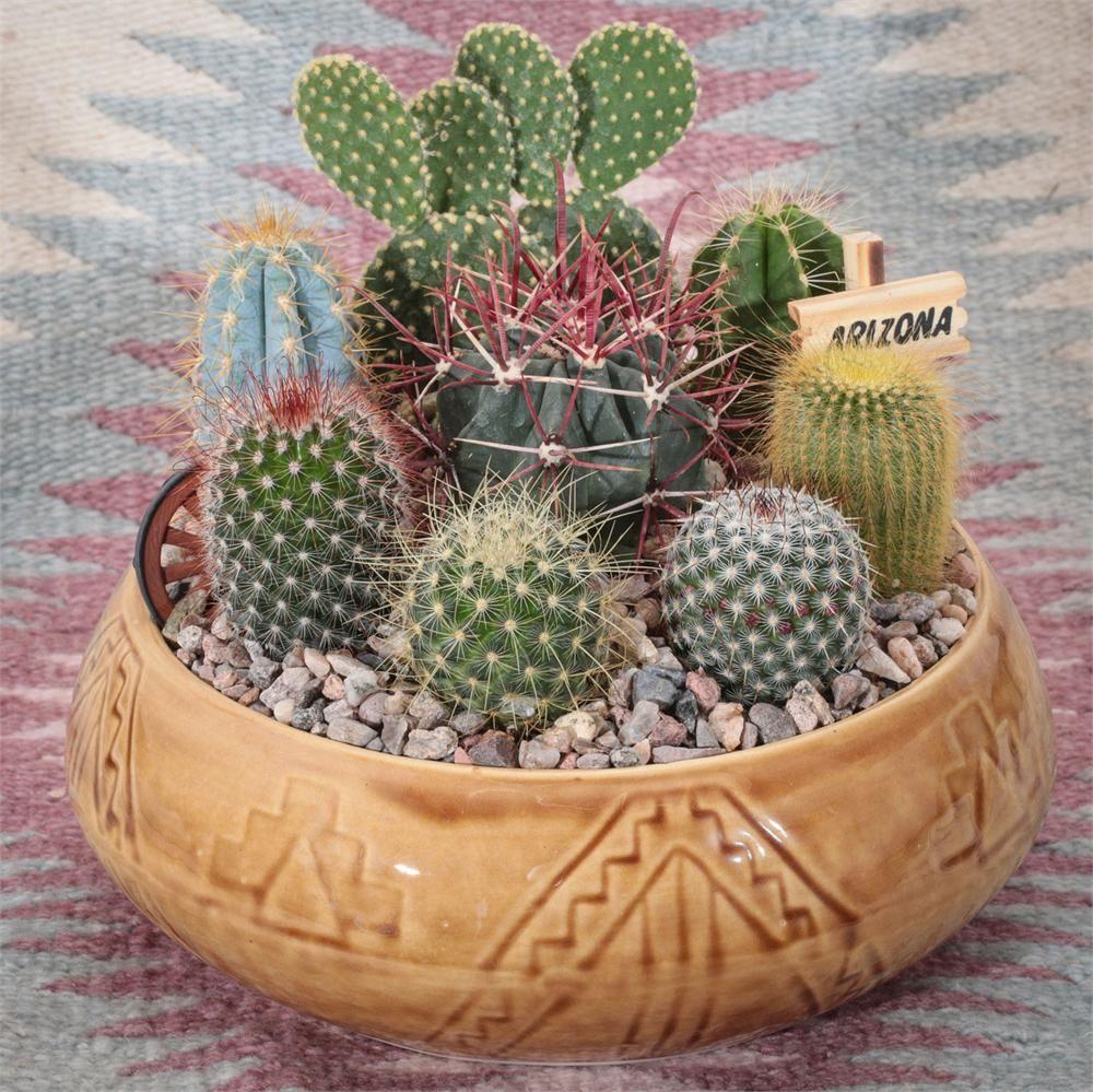 Southwest Cactus Garden 9 inch Cactus flower, Cactus
