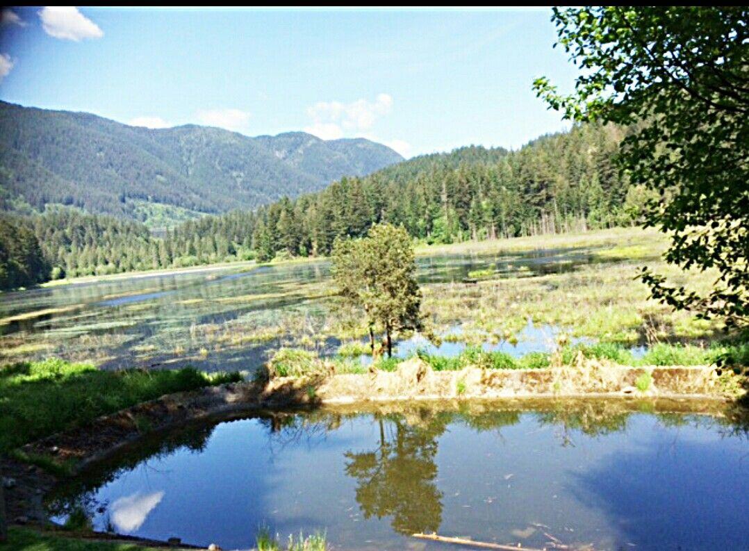 Menekada Trail Coquitlam Bc