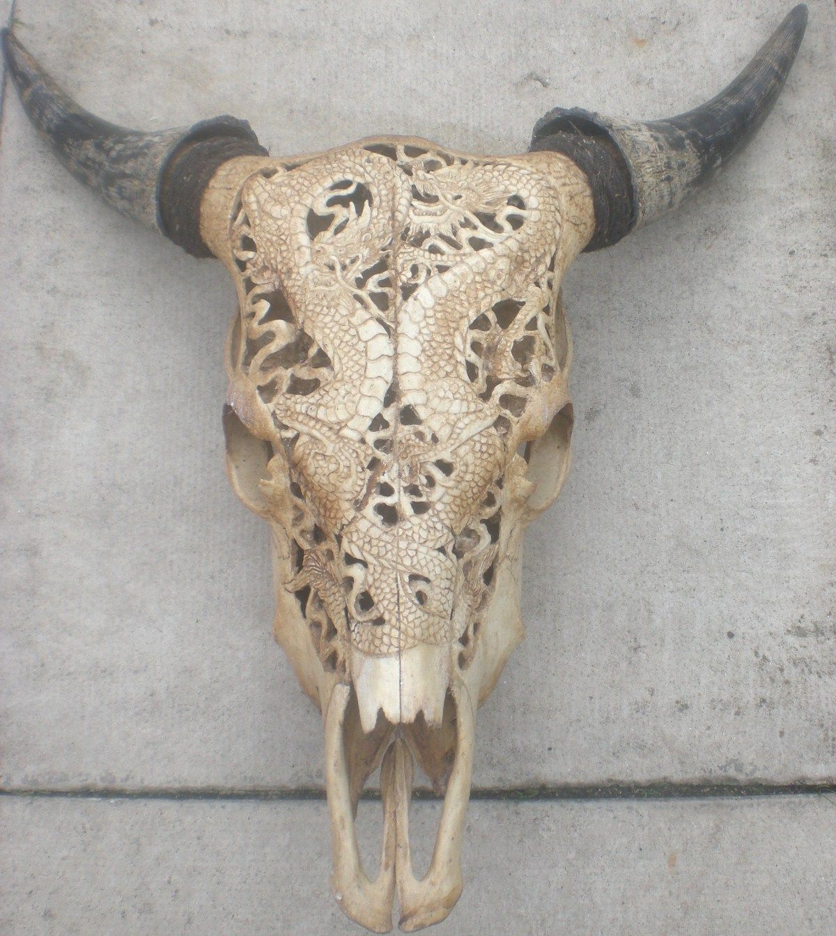 Hand carved cow skull from bali fashion collaboration