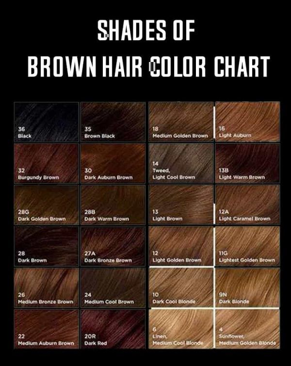 Shades Of Brown Hair Color Shades Of Brown Hair Color Hair Color hair color chart