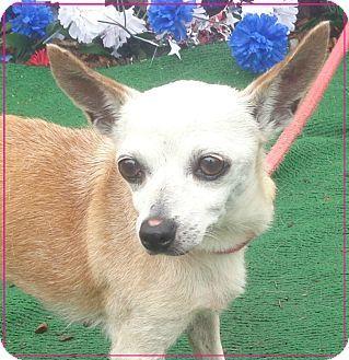 BABY - URGENT - Cobb County Animal Shelter in Marietta, GA ...