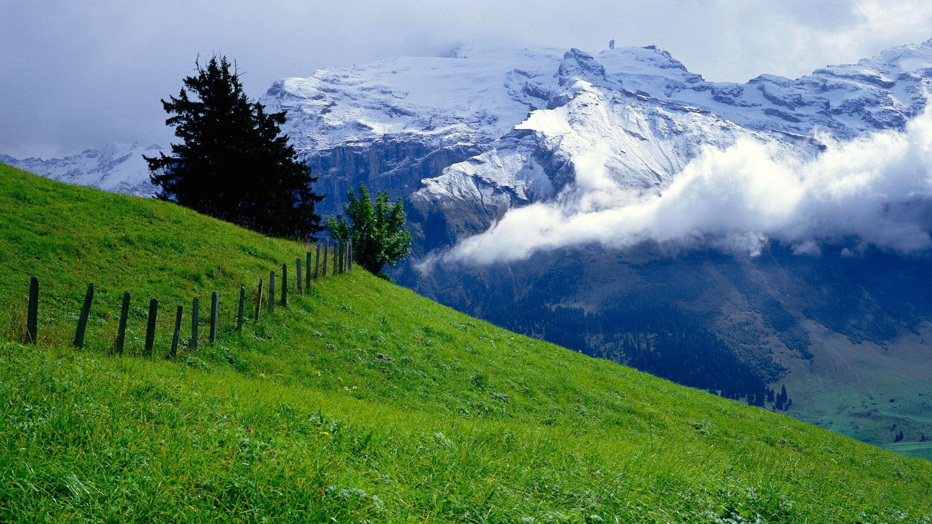 Beautiful Green Mountain Wallpaper Nature Background Images