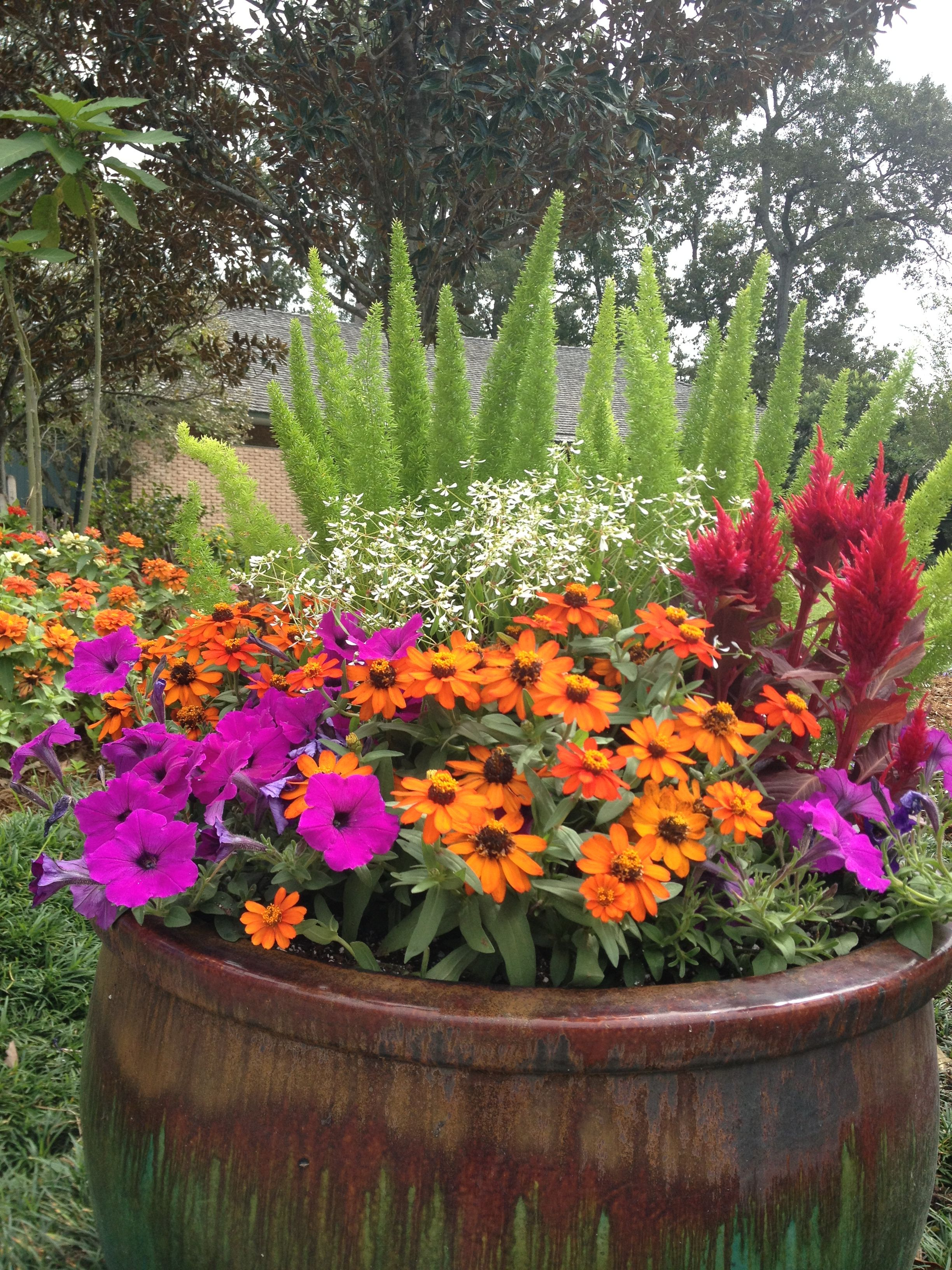 Colorful mix plants in glaze pots at the end of the for Colorful plants for landscaping