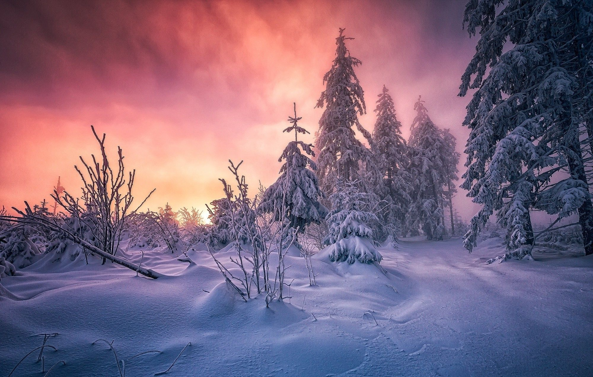 Forest Winter Sunrise Germany Snow Trees Cold Clouds Path White Yellow Pink Nature Landscape Wallpaper Background Images Desktop Background Images