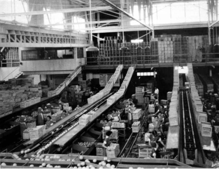 1955 Citrus Packing House Winter Haven Fl Winter Haven Florida Old Florida Winter Haven